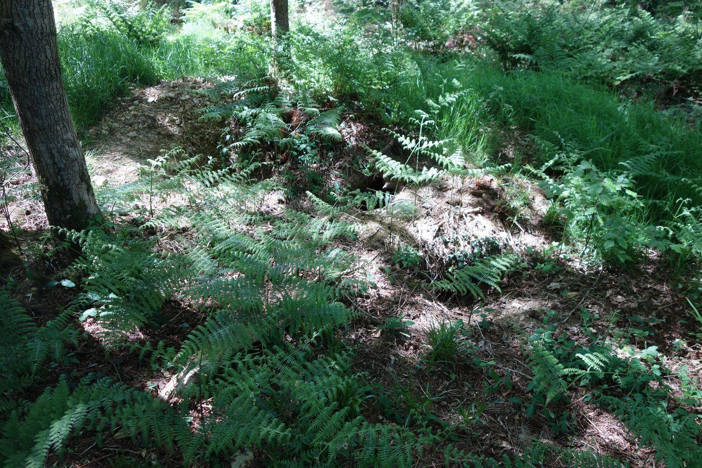 Overgrown sett